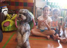 kutyas_kisallatos_tabor_05.jpg