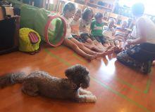 kutyas_kisallatos_tabor_07.jpg