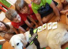 kutyas_kisallatos_tabor_23.jpg